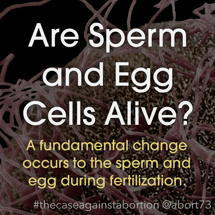 Are Sperm and Egg Cells Alive?: A fundamental change occurs to the sperm and egg during fertilization.