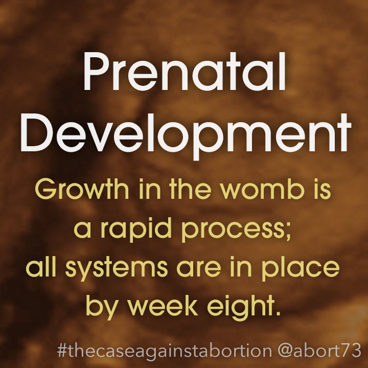 Prenatal Development: Growth in the womb is a rapid process; all systems are in place by week eight.